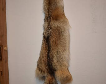 Coyote pelt 15-018-taxidermy, canine, pelt, fur, rug, animal, hide