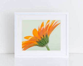 Orange Gerbera Daisy - Flowers - Fine Art Photography Print