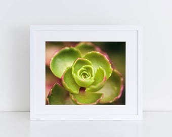 Succulents - Flowers - Fine Art Photography Print
