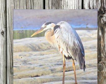 Canvas Print of Original Photography  Great Blue Heron