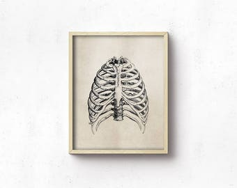 Anatomy Art PRINTABLE - Rib Cage - Vintage Science Art Print - Office Decor - Digital Download - Brown Black - Medical Student - SKU:3011