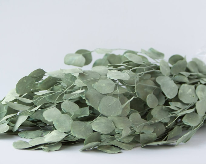 Silver Dollar Eucalyptus - Preserved Sage Green - Preserved Greenery - Preserved Foliage
