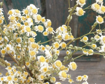 Dried feverfew flowers- little white and yellow daisy like flowers- filler flowers-  DIY craft flowers-  boutonniere supply