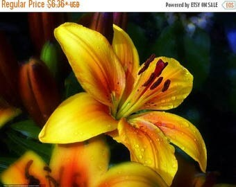 BIG SALE Asiatic Lily Bulbs Golden Joy real thriller in the garden .Perennial