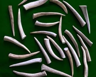 """25 ct Deer Antler Assorted Tips 4-6"""" (#1 & #2 antlers)"""