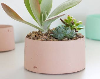 Concrete Planter for Succulents and Cactus - Blush Pink