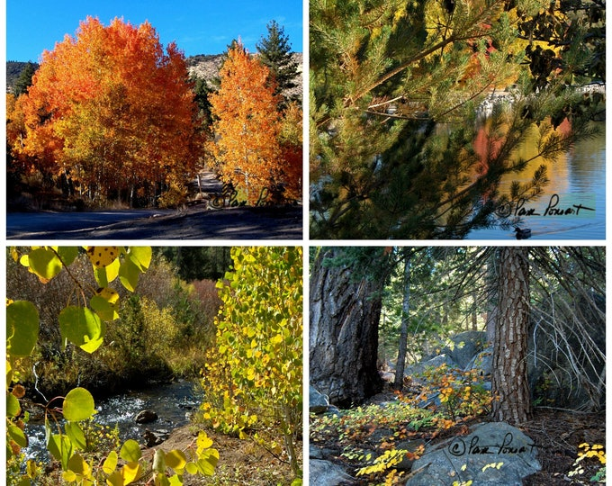 NATURE'S MOST COLORFUL Time of Year is captured by Pam Ponsart of Pam's Fab Photos in this assorted 4-piece set