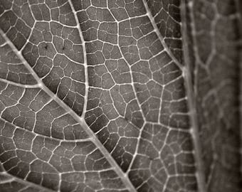 Veins  - Fine Art Photography Print