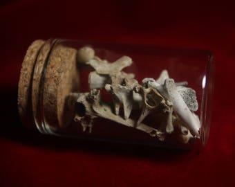 Jar Of Bones.