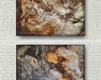 Abstract Tree Photo Set | Tree Bark Print Series | Macro Forest Photo Pair | Abstract Nature Set | Photo Series | California Nature Art Set