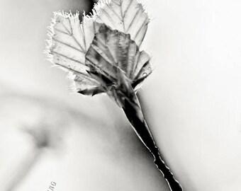 o.T. (nature #4)