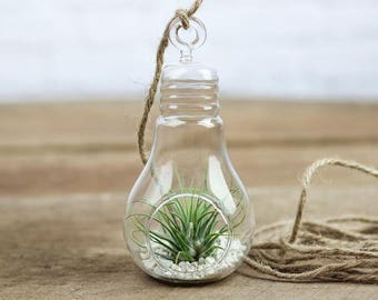 Bulb Terrarium, Geometric Glass Terrarium, Modern Planter, Wedding Centerpiece, Air Plant Terrarium, Succulent Planter , #GiftsforHer