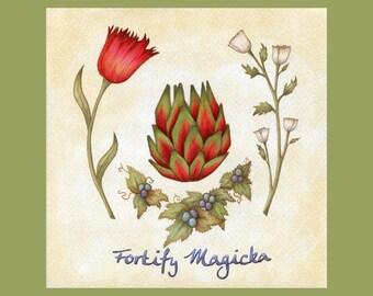 Fortify Magicka - Digital Download - Elder Scrolls Alchemy - Botanical Scientific Illustration - Skyrim