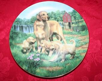 Golden Retreivers Plate by Robert Christie