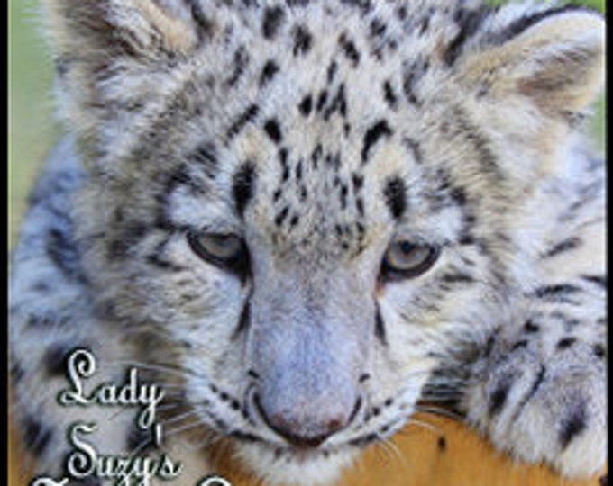 Lady Suzy's Snow Leopard - Private Edition - Handcrafted Perfume - Love Potion Magickal Perfumerie