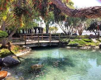 Printable, download, Pond by the Sea, digital download, Seaport Village, Pond, photography, san diego, california,