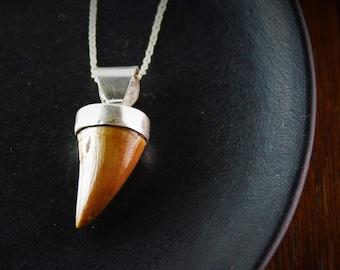 Sterling silver dinosaur tooth pendant/men pendant/dinosaur tooth/fossil pendant/men jewelry/handmade pendant/gemstone pendant/fossil
