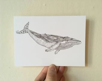 Illustrated whale postcard.