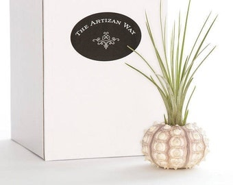 Sputnik Sea Urchin Planter with Air Plant