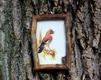 Bird art print Wood frame Bird picture Blue jay picture Antique vintage illustration Wooden rustic decoration Nature art Raw wood