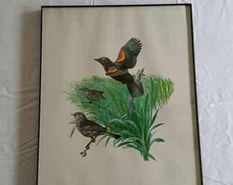 """vintage 11""""x14"""" red wing blackbird & swallow birds signed litho color print by bob hines 1970 's - redwing bird art picture photo wildlife"""