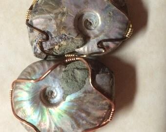 Ammonite opalized