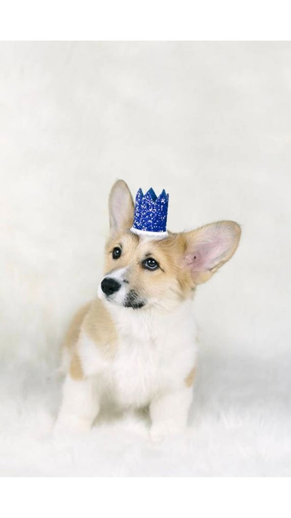 Dog Birthday Hat || Dog Birthday Crown || Animal Birthday Crown || Pet Accessory || Dog Party Hat || Kitty Cat Pig Birthday Hat