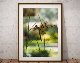 Dragonfly Print, Wall Decor, Art Prints, Nature Photography