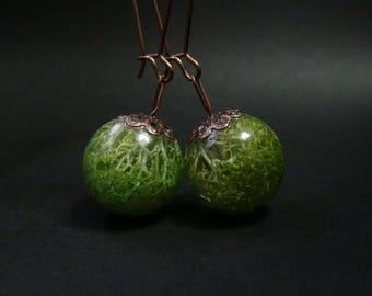 Moss earrings,real moss in a sphere,moss accessories,blue moss,shrub moss,reindeer moss,moss jewelry,green moss,authentic nature jewelry