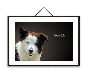 Border Collie - Dog breed poster, wall sticker, nursery decor, dog print, nursery print, shabby print   Tropparoba - 100% made in Italy