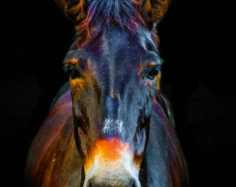 Colorful Mule