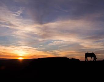 Pony in Dartmoor at Sunset