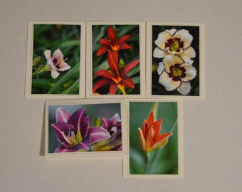5 Fine Art Daylily Photo Greeting Card Set, Lily Notecard Set, Fine Art Stationary, Blank Inside, Flower Cards, Garden Notecards,