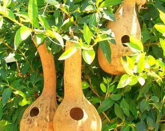 Three plain  Gourd Birdhouses