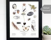 Gathered Treasures - Nature Collection - Educational Printable -  A4 and 8x10 - Wild + Free, School Room Wall Art