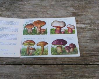 Vintage 1970/1980s French children's educational books Volumetric Mushrooms