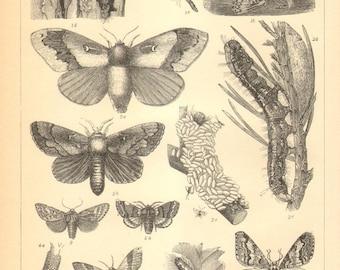 1896 Original Antique Engraving of Insects, Flies, Wasps, Weevils, Leaf Beetles, Moths