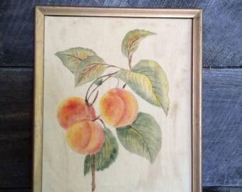 original painting - peaches on velvet