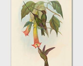 Hummingbird Art, Office Wall Decor (Bird Lover Gift, John Gould Nature Artwork)