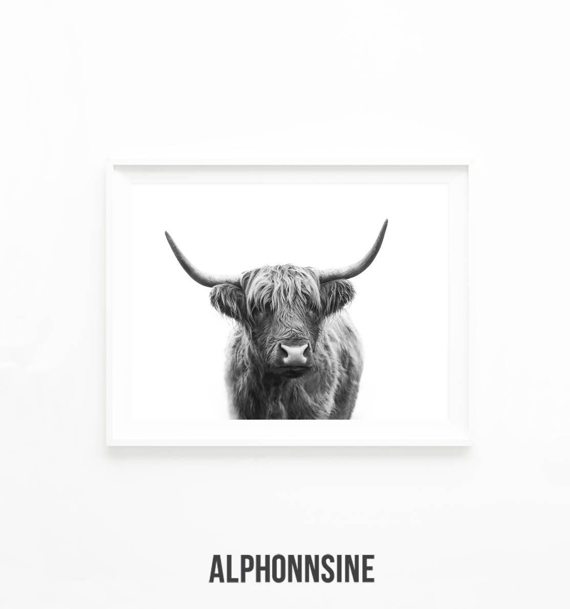 highland cow download printable art print highland bull