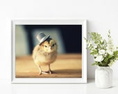 Baby Chick In A Top Hat Print Chicken Photography Chicks in Hats Baby Animals Picture Nursery Art
