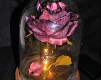 Purple enchanted rose, beauty and the beast rose