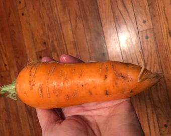 Organic Carrots Seeds