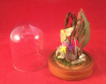Antique Victorian Style Taxidermy Entomology Rosy Maple Moth glass Dome Display!
