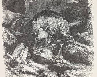 1889 - Original french antique etching of a hyena - Antique engraving of animals from Paris France