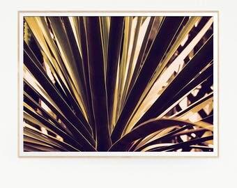 Succulents Print Poster Wall Decor Tropical Retro Vintage Cactus Photo Nature Minimalist Plants Sun Leaf Succulents Green Desert Photo 1036
