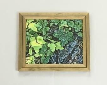 Green Leaf Print, Leaves Print, Plant Print, Nature Print, 8x10 Art, Housewarming Gift, Nature Photography, Botanical Art, 11x14 16x20 Print
