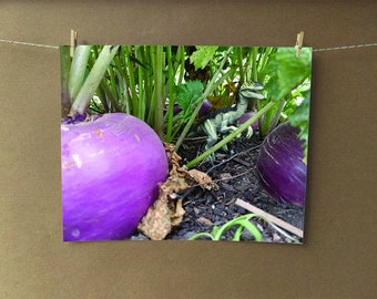 Raptor Meets Turnip Photo Print, Dinosaur Photo, Food Photo, Garden Photo