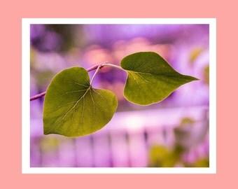Leaf print, leaf photography, nature wall art, fine art leaf photo, leaf wall art, nature lover gift, pretty leaf print, leaf wall decor