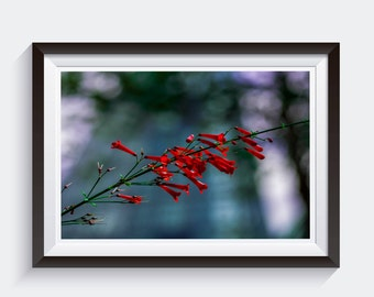 Vibrant Red Flowers Picture, Nature Fine Art Photography Print, Flowers Art Decor *unframed*